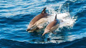 Hurawalhi Maldives Dolphin Safari