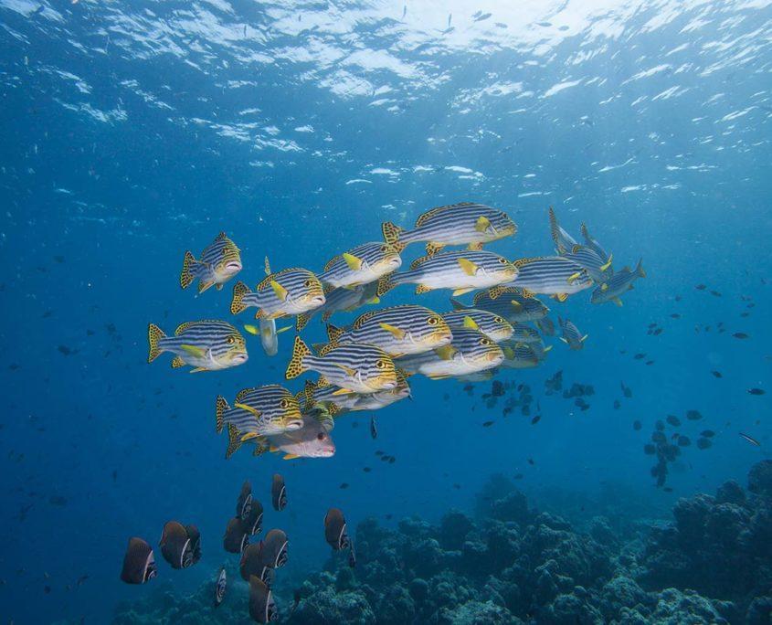 Hurawalhi Maldives Snorkeling
