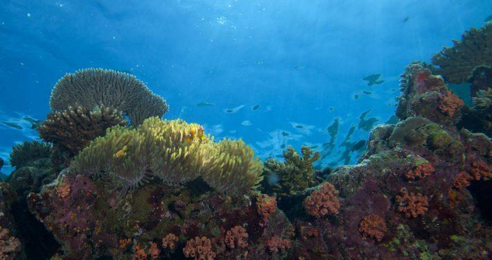 Hurawalhi Maldives Snorkelling