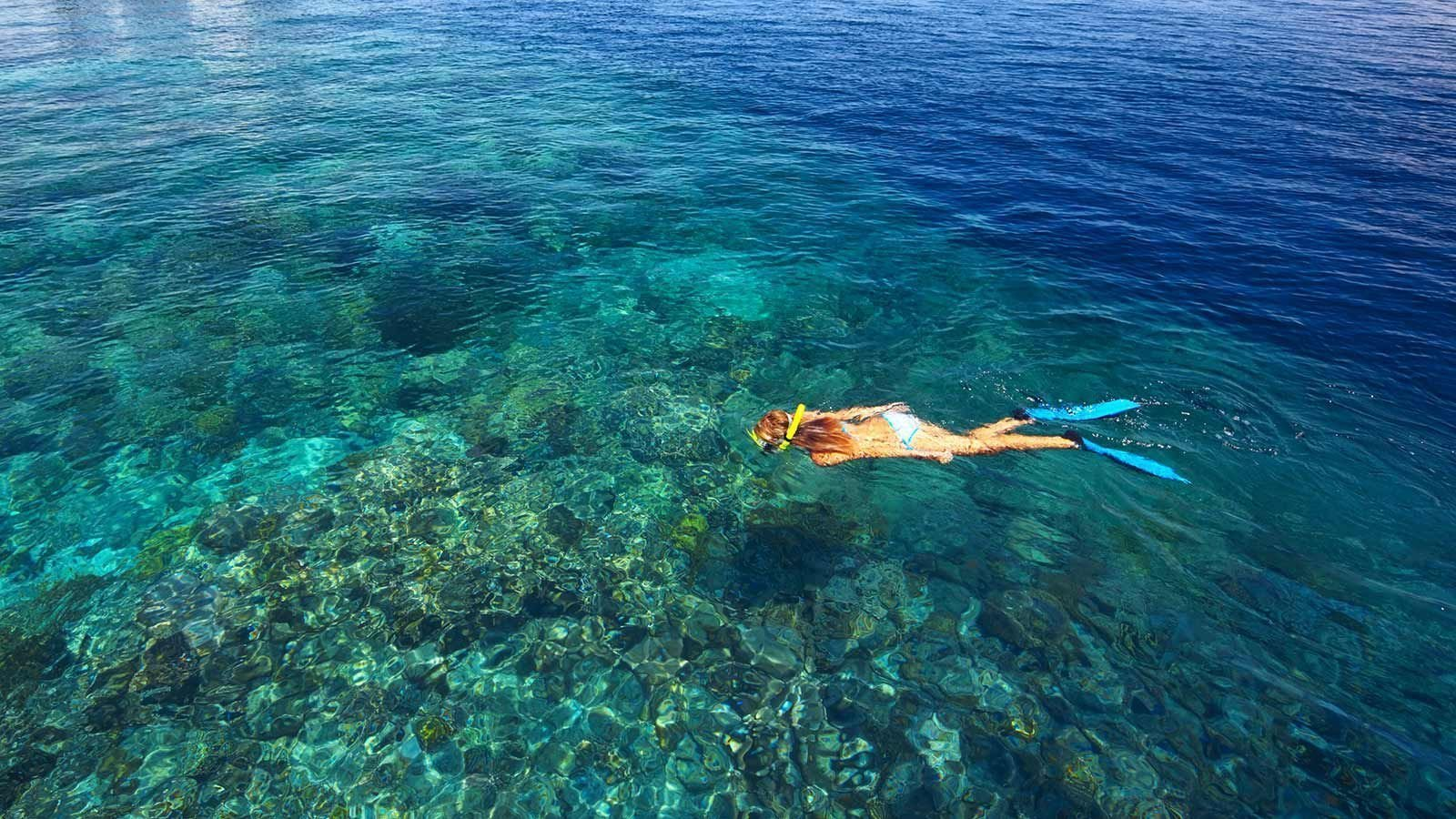 Snorkelling and snorkel trips at hurawalhi maldives resort for What saltwater fish are in season now