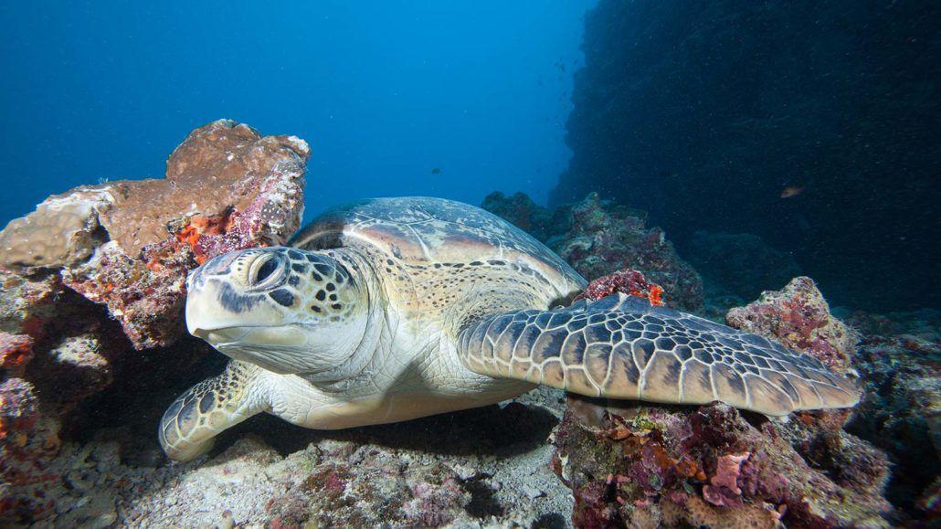 Scuba Diving Maldives Hurawalhi