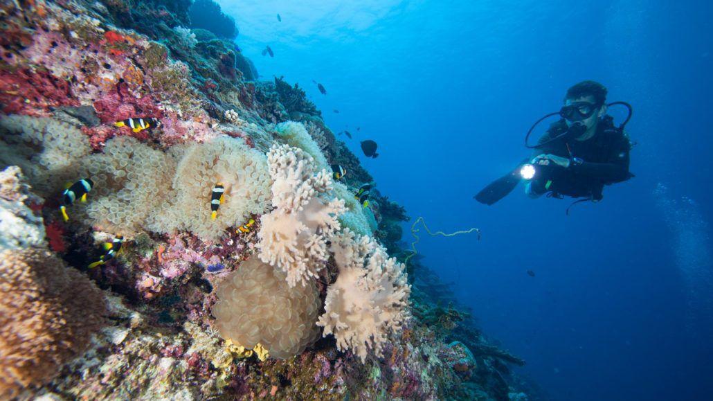 Marine Biologist Work Environment | Marine World
