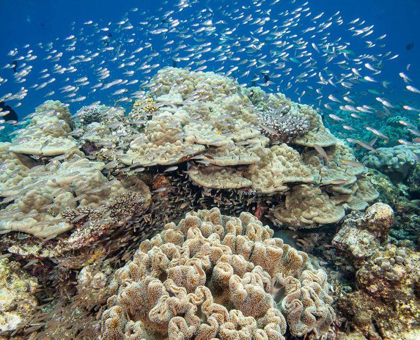 Hurawalhi Maldives Coral Reef