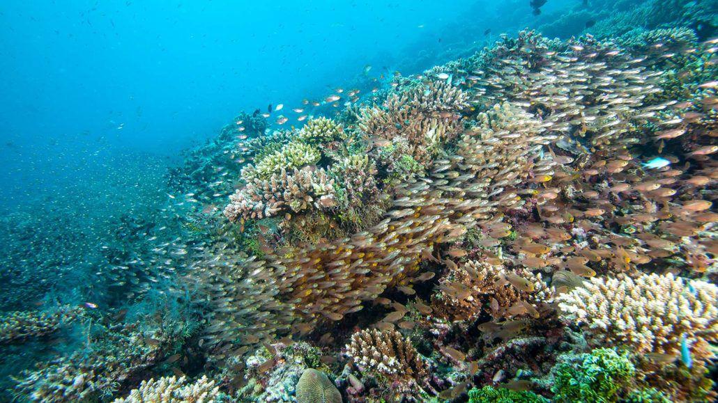 Marine Biologist Life   Marine World