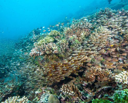 Hurawalhi Maldives Coral Reefs