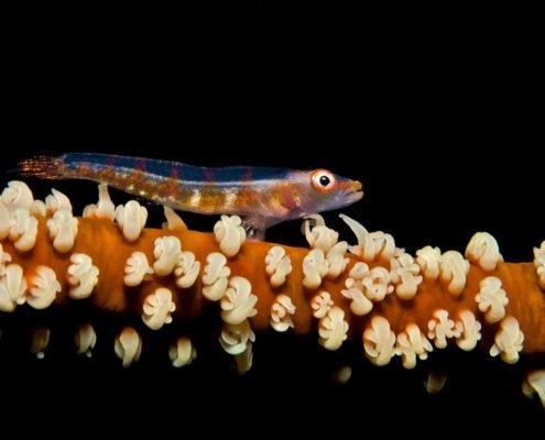Hurawalhi Maldives diving