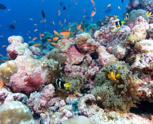 Hurawalhi Maldives Resort diving