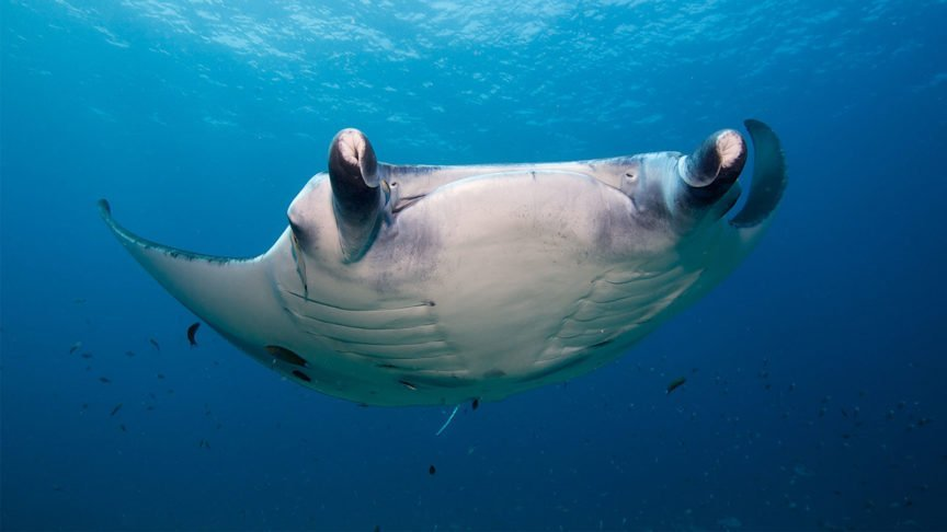 Mantarochen Hurawalhi Maldives