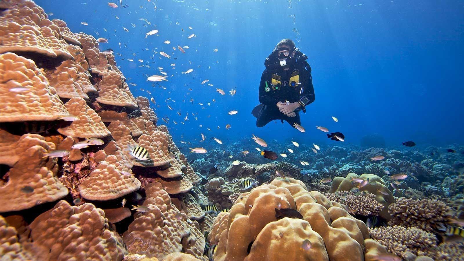Hurawalhi Maldives rebreather diving