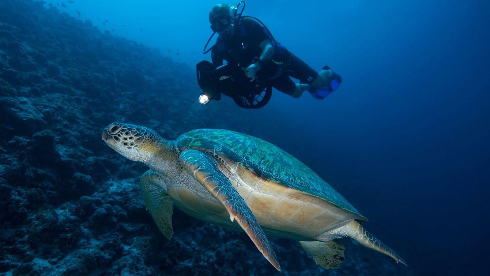Hurawalhi Maldives scooter diving