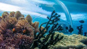 Unterwasserrestaurant Hurawalhi Maldives Coral Reef