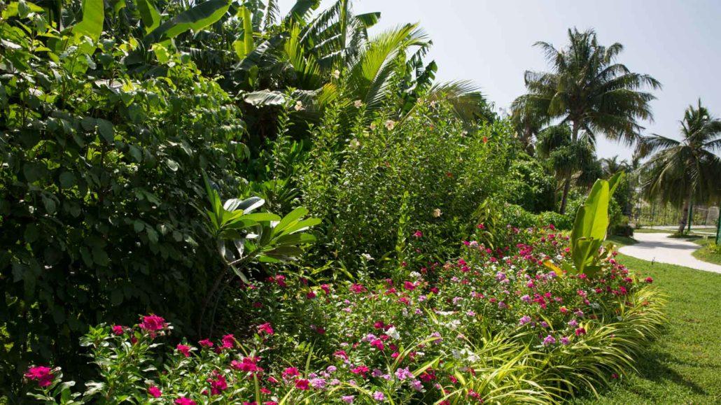 Gardening and Landscaping at Hurawalhi Maldives