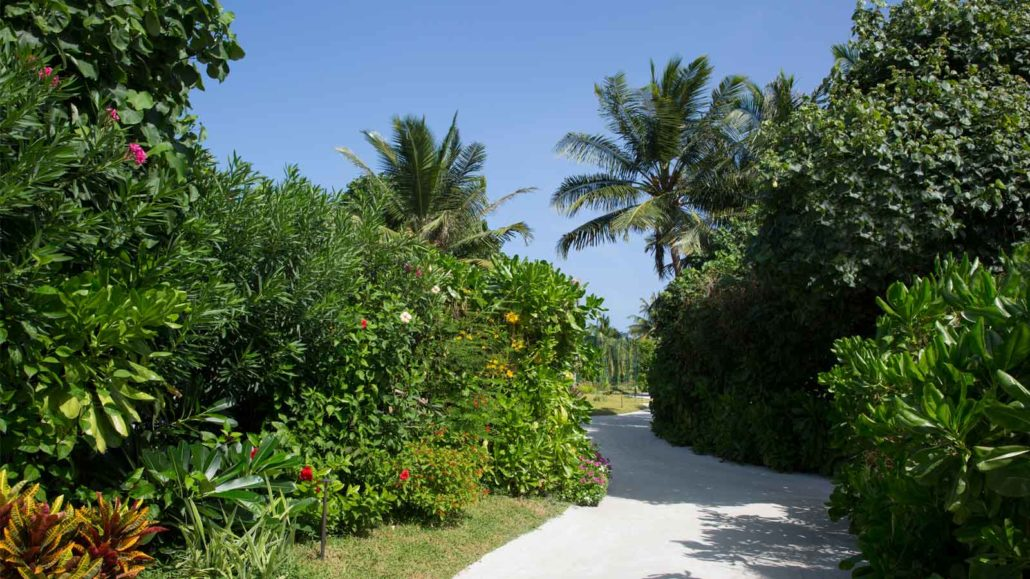 Gardening and Landscaping at Hurawalhi Maldives