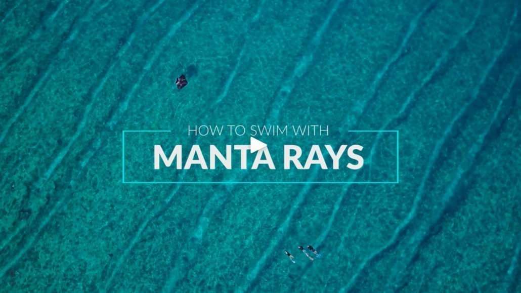 Manta Trust How to Swim with Manta Rays
