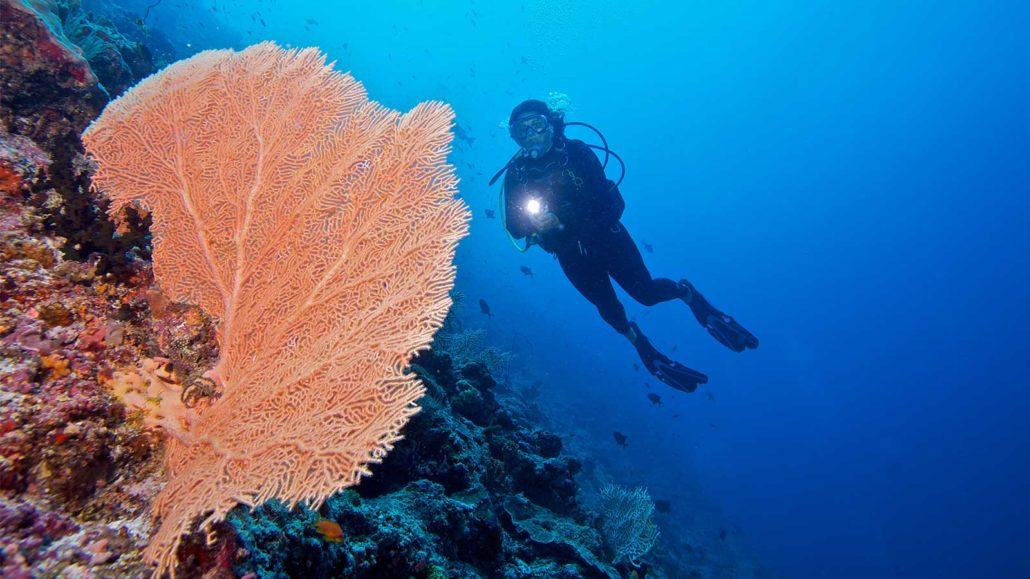 Diving Hurawalhi Maldives