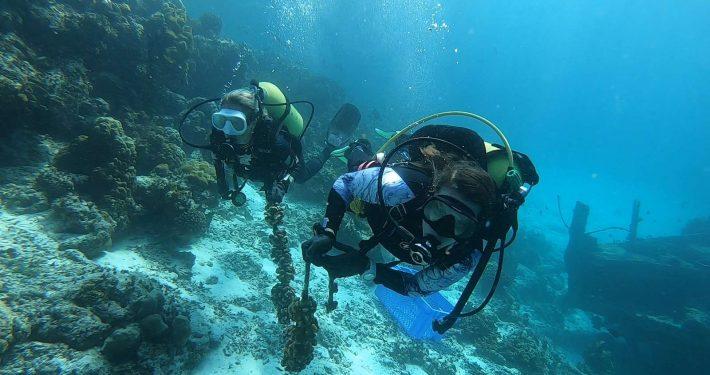 Hurawalhi Maldives Coral Project