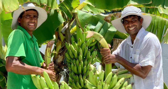 Organic Produce Hurawalhi