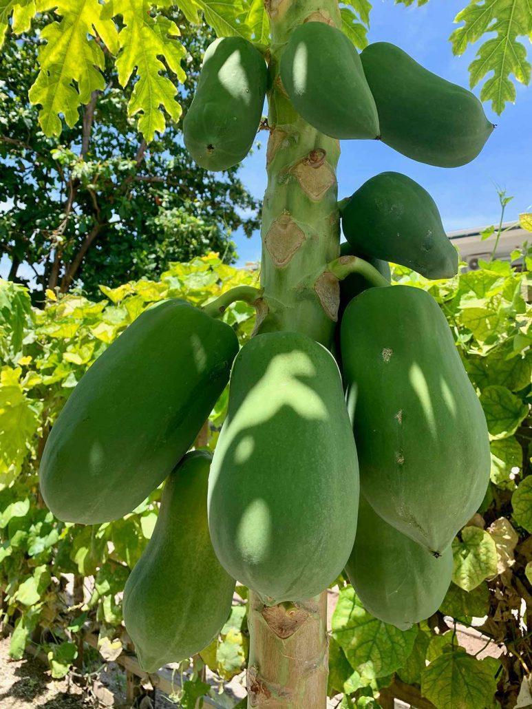 Organic Garden Hurawalhi